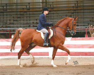 Pamela Kincaid shows her horse Magic Storm at a horse show in 2016 where she won several awards.