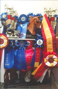 Pamela Kincaid displays the awards Magic Storm has won over the years.
